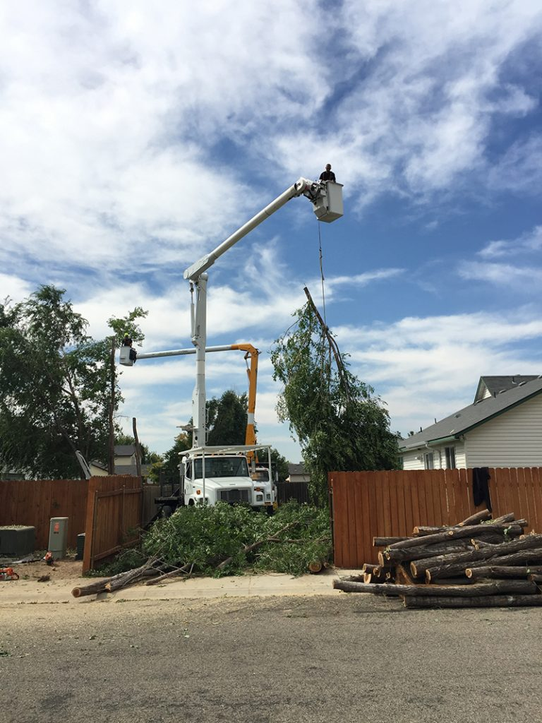 Climbing Sammy S Tree Service Boise Meridian Caldwell Tree Service Tree Care Specialists Tree Removal